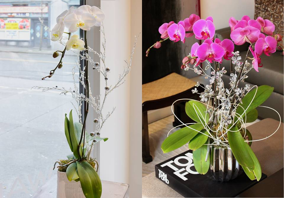 Who doesn't love orchids