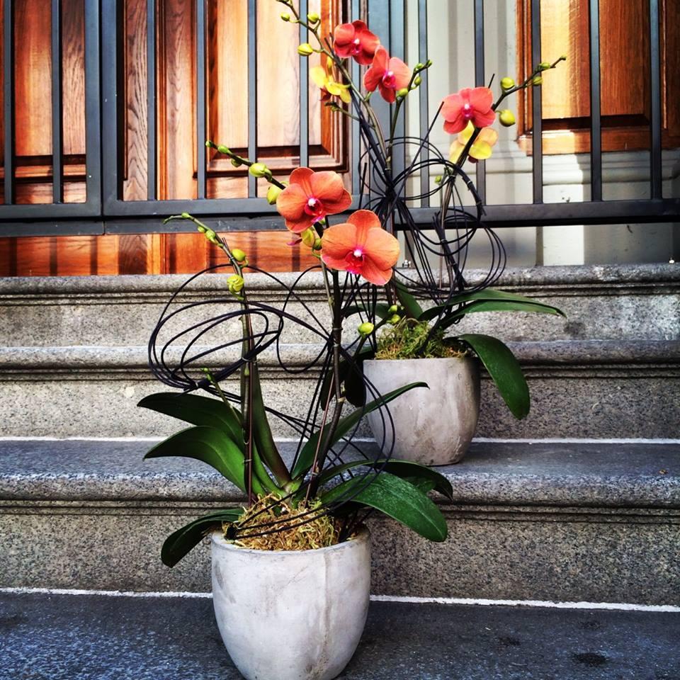 orchid_ concrete